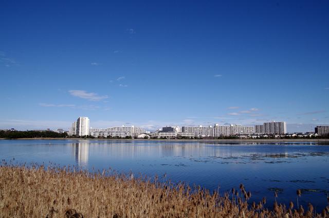 谷津干潟(PIXTA)