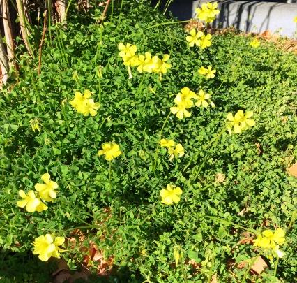 片隅に咲いた花(1月16日撮影)