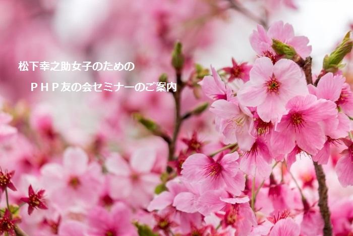 JS745_piinksakura_TP_V
