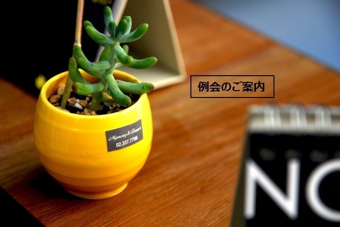 potted-plant-698187_960_720
