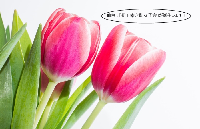 tulips-2165531_960_720